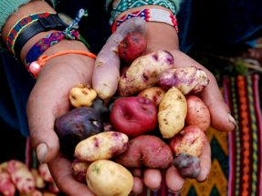 Pisac Artisans and Potato Park Tour 1D