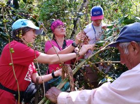 Inca Jungle Coffee Trail towards Machu Picchu 2D