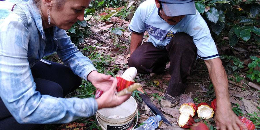 Fair Trade Cooperative Cocoa Tour